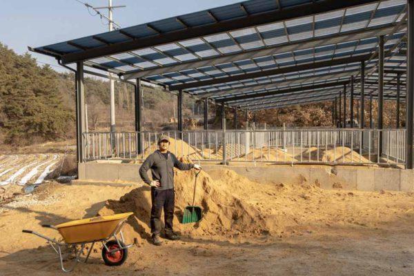80톤 톱밥 삽질로 돼지집 만들기